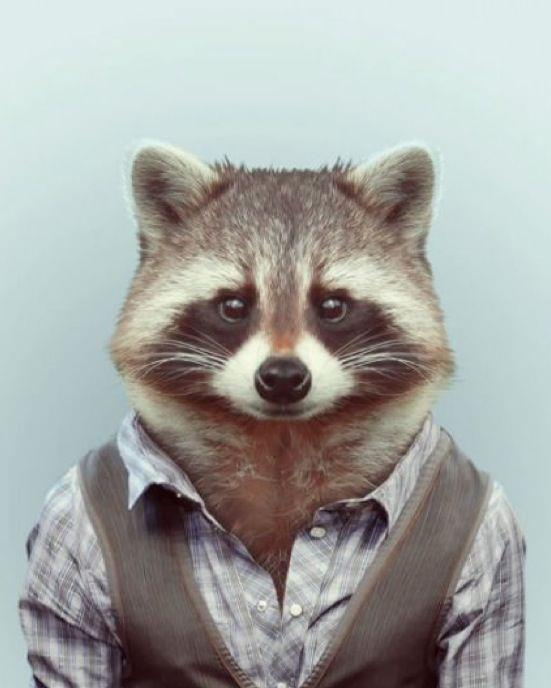 Raccoon's Avatar